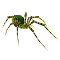 Dusk Spiderling (yellow-green variant)
