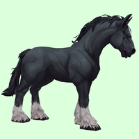 Black Horse w/ White Socks