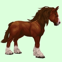 Dark Chestnut Horse w/ Long Mane