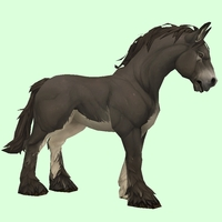 Dark Brown Horse w/ White Belly