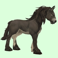 Dark Brown Horse w/ White Belly & Long Mane