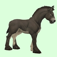Dark Brown Horse w/ White Belly & Short Mane/Tail