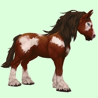 Brown & White Horse w/ Long Mane