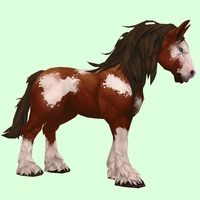 Brown & White Horse w/ Stockings & Long Mane