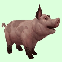Spotted Dark Pink Pig