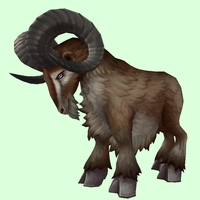 Dark Brown Ram