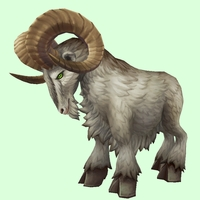 Brown-Grey Ram
