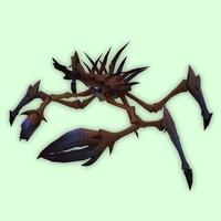 Brown Spider Crab