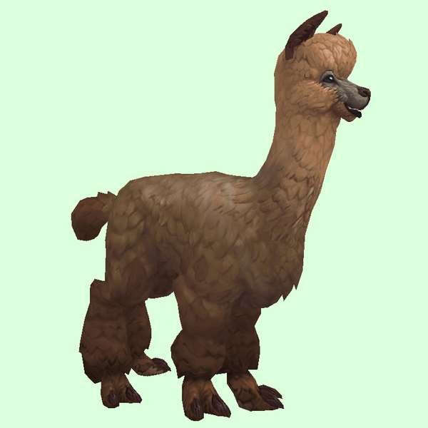 Brown Alpaca