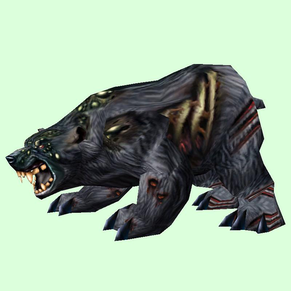 Diseased Black Bear