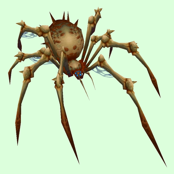 Rusty-Buff Bone Spider