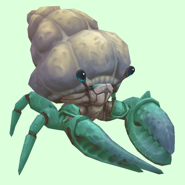 Teal Hermit Crab