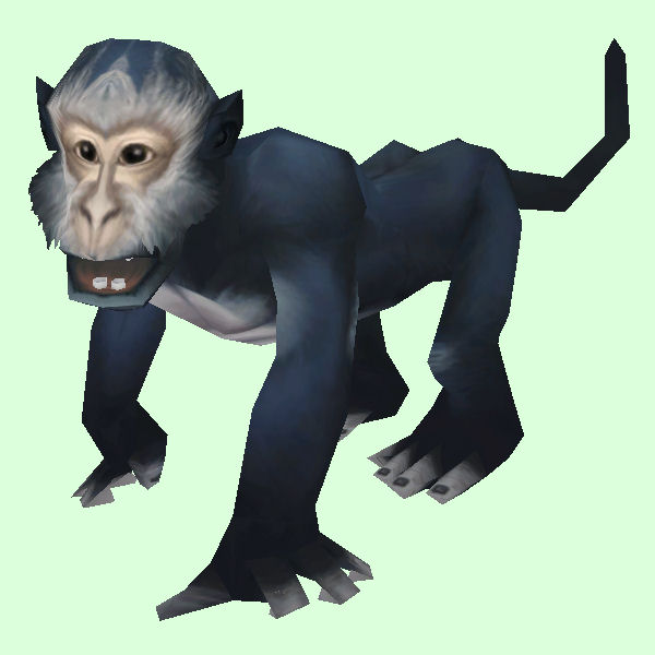 Dark Grey Monkey