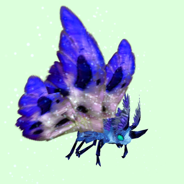 Cyan-Blue Moth w/ Indigo & White Wings