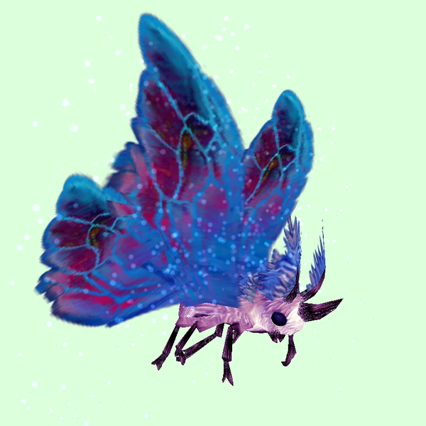 Pink Moth w/ Blue & Magenta Wings