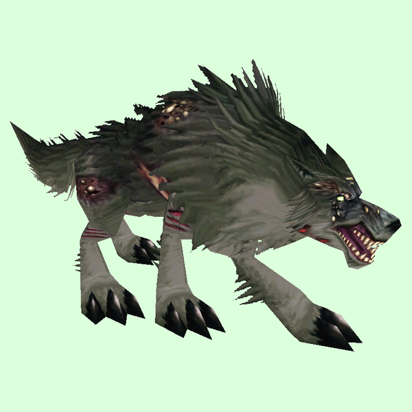 Diseased Black Wolf
