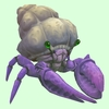 Purple Hermit Crab