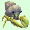 Yellow Hermit Crab
