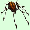 Orange & Black Spider