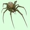 Grey-Brown Spider