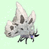 Grey Moth w/ White Wings