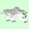 Hunched White Spotted Cat